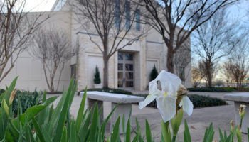 Father Gollob: Our faith blooms anew during this holy season